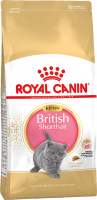 RC Kitten British Shorthair